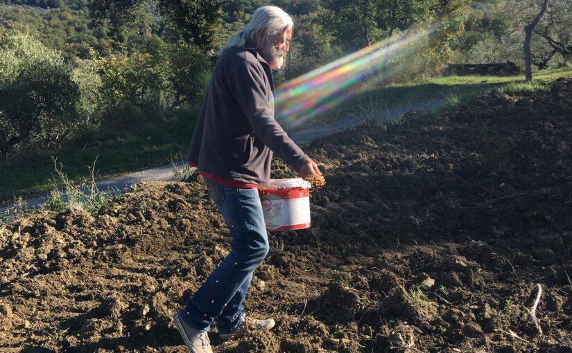VITA IN CAMPAGNA – In Cilento, a Felitto, di questi tempi si semina il grano