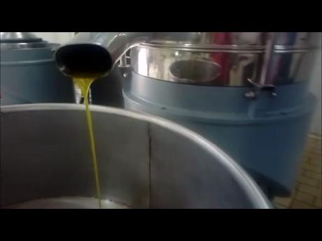 """VITA IN CAMPAGNA – Visita al frantoio. La """"nascita"""" dell'olio nuovo in terra di Cilento"""